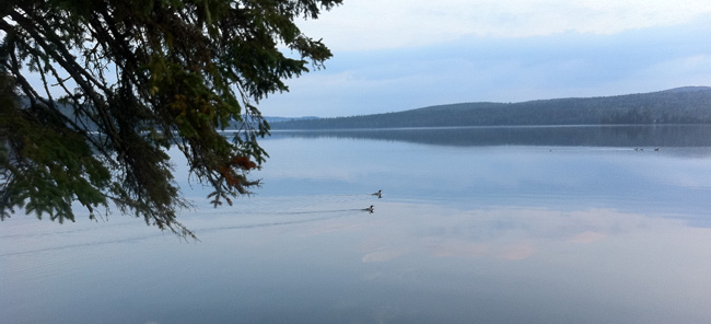 Allagash Wilderness Waterway - Lake Loons on Round Pond